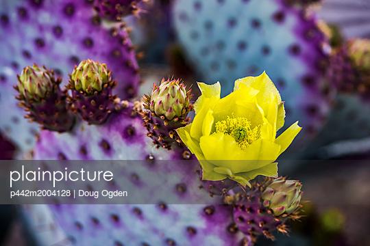 p442m2004128 von Doug Ogden