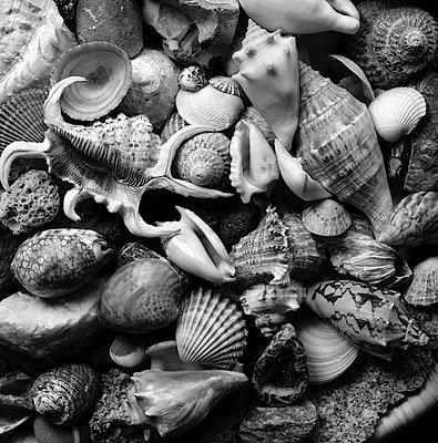 Sammlung von Muschel- und Schneckengehäusen - p1016m815718 von Jochen Knobloch