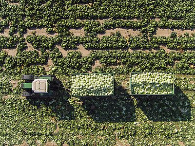Directly above view of tractor and trailers of cabbage in field, St. Poelten, Austria - p301m1406315 by Stephan Zirwes