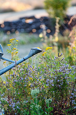 Part of metal watering can in garden - p312m1470336 by Ulf Huett Nilsson
