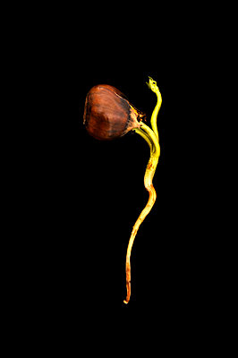 Seedling - p470m886222 by Ingrid Michel
