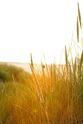 Holländische Küste - p5670680 von ofoulon