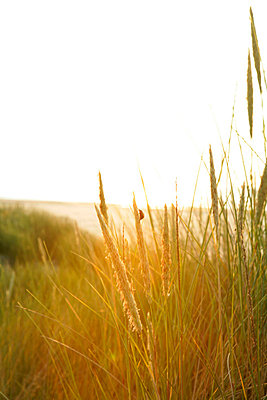 Dutch coast - p5670680 by Olivier Foulon