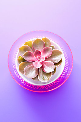 Succulent - p1149m2086691 by Yvonne Röder