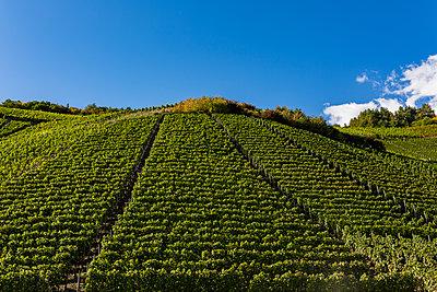 Im Weingebiet - p1271m1539697 von Maurice Kohl