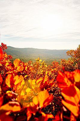 Landschaft im Herbst - p968m2007990 von roberto pastrovicchio