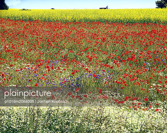 Red poppy - p1016m2064005 by Jochen Knobloch