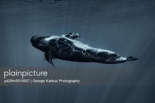 p429m2019307 von George Karbus Photography