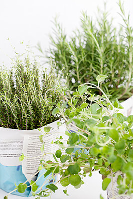 Green herbs or plants wrapped in paper - p312m1551916 by Johner Images