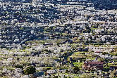 Cherry blossom in Jerte valley - p719m1563578 by Rudi Sebastian