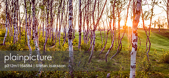p312m1164584 von Stefan Isaksson