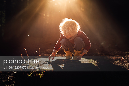 Blond child on tree stump in beautiful forest light in New Zealand - p1166m2207970 by Cavan Images