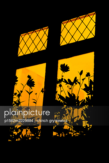 Silhouetted Flowers Outside Lit Old Window At Night - p1562m2229884 by chinch gryniewicz