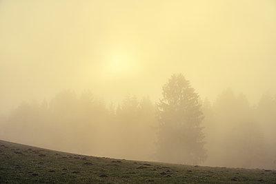 Stimmungsvoller Schwarzwald - p1312m2089796 von Axel Killian