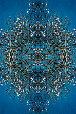 Abstract kaleidoscope pattern of flowering magnolia tree canopies against blue - p1047m2210810 by Sally Mundy