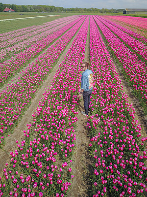 A men in a flower Tulip field in the netherlands from above - p1166m2157004 by Cavan Images