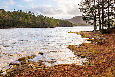 Loch an Eilein and the Rothiemurchus Forest, Aviemore, Cairngorms National Park, Scotland, United Kingdom, Europe - p871m1499853 by Matthew Williams-Ellis