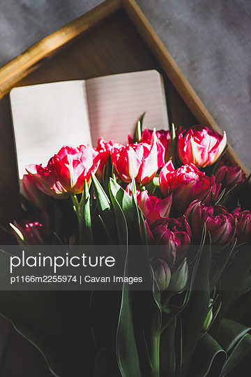 tulips in sunlight on a tray - p1166m2255974 by Cavan Images