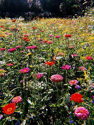 Blumenwiese - p1189m2263806 von Adnan Arnaout