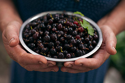 Hands holding bowl of berries - p555m1504263 by Dmitriy Bilous