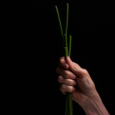 Hand with a plant - p813m916231 by B.Jaubert