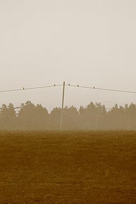 Birds on power line - p235m972888 by KuS