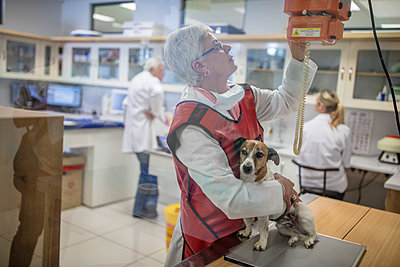 Woman getting a dog ready for x-rays - p300m1175620 by zerocreatives