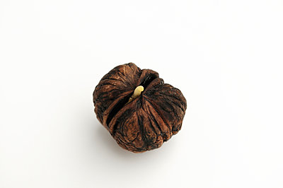 Seedling walnut - p470m934083 by Ingrid Michel