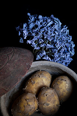 Blaue Hortensie - p993m698554 von Sara Foerster