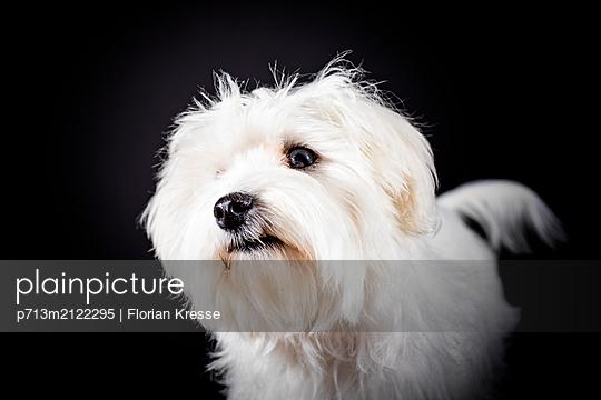 p713m2122295 by Florian Kresse