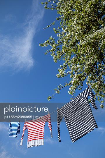 Wäsche an Wäscheleine - p1156m2086955 von miep