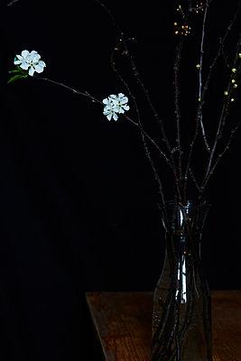 Vase mit Blumen vor Schwarz - p1227m1138999 von indra ohlemutz