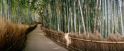 A pathway through a bamboo grove in Japan - p30118004f by Sven Hagolani