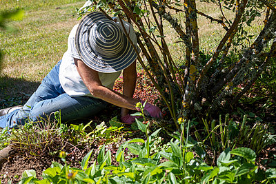 Woman gardening - p445m2205563 by Marie Docher