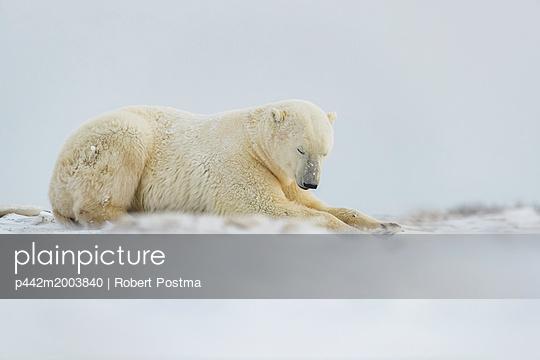 p442m2003840 von Robert Postma