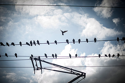 Birds on electric tramway wires - p1007m1134834 by Tilby Vattard