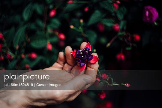 p1166m1524819 von Cavan Images