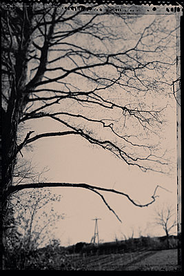 Twigs - p1088m1050183 by Martin Benner