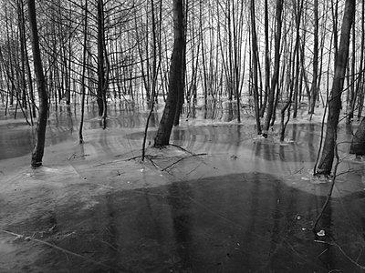 gefrorener wald - p627m671191 by Hendrik Rauch