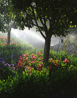 Irrigation in the garden - p945m2028051 by aurelia frey