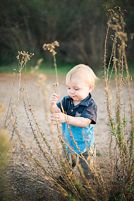 Little toddler boy playing with dried flowers - p1166m2201440 by Cavan Images