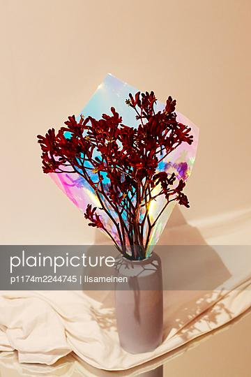 Känguruhblume - p1174m2244745 von lisameinen