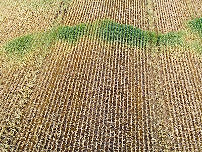 Dürre in Niedersachsen, Deutschland - p1079m2157741 von Ulrich Mertens