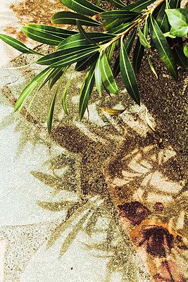 Schatten eines Oleanderbaumes - p1255m1152854 von Kati Kalkamo