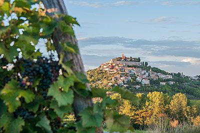 Vineyard near Motovun - p289m1541724 by Doreen Enders