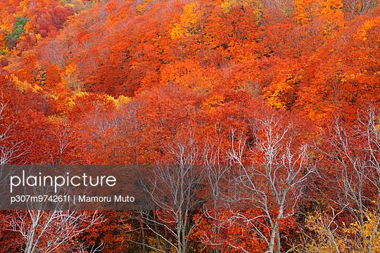 Autumn colors, Aomori Prefecture, Japan - p307m974261f by Mamoru Muto
