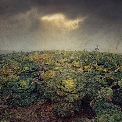 Brassica - p1633m2211095 by Bernd Webler