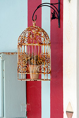 Rusty birdcage ornament with pot plant - p967m934807 by Wessel Wessels