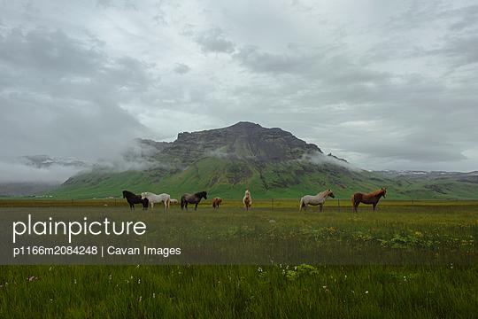 p1166m2084248 von Cavan Images