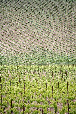 Weinanbaugebiet im Frühling - p2650964 von Oote Boe